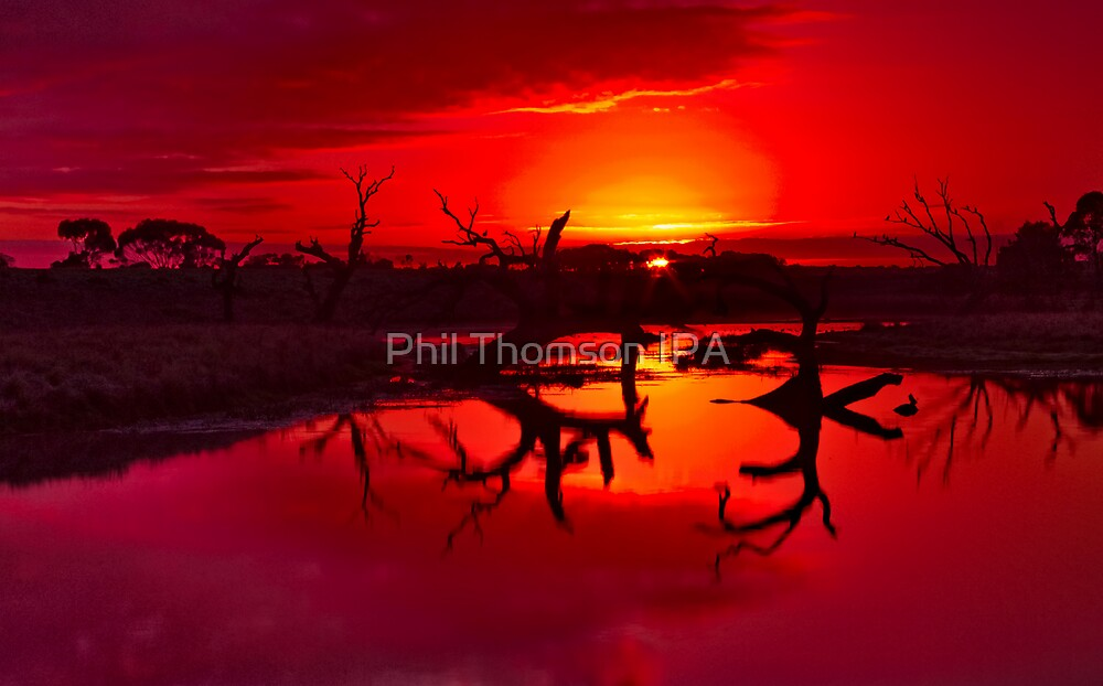 """""""Tranquility Ablaze"""" by Phil Thomson IPA"""