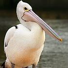 Cute Pelican at San Remo by Maureen Clark