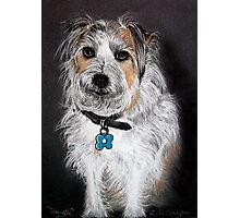 Dougie - Pet Portrait Photographic Print