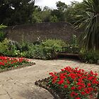 red flowers -(120811c)- digital panorama photo by paulramnora