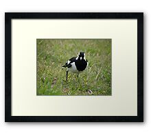 Ruffled Up Framed Print