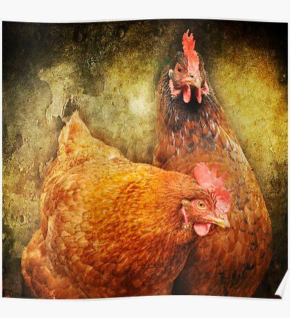 Urban Chicks ~ Poster