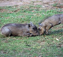 headbutting hoglets by gruntpig