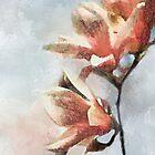 Magnolia by ellenspaintings
