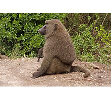 the only gay baboon in the village Photographic Print
