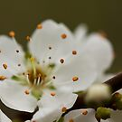bloomin' beautiful by Hege Nolan
