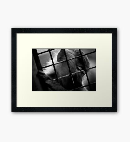 Solitary Framed Print