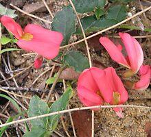 Red Pea flower by Rocksygal52