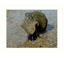 Slimey Sammy the Slippery Sea Snail Art Print