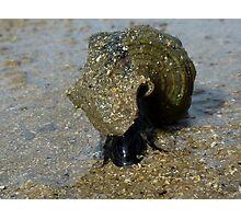 Slimey Sammy the Slippery Sea Snail Photographic Print