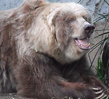 Kodiak Bear by Kymbo