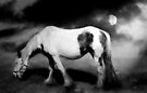 Night Mare by Carol Bleasdale