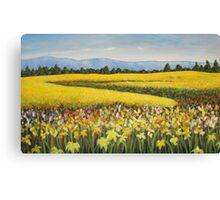 Canola Fields, Collingwood, Ontario 60x36 Acrylic Canvas Print