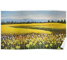Canola Fields, Collingwood, Ontario 60x36 Acrylic Poster