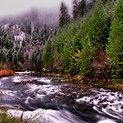 Quartzville Creek Snow by Charles & Patricia   Harkins ~ Picture Oregon