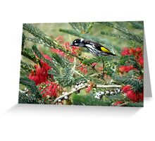 New Holland Honey Eater and Red bottle brush Greeting Card