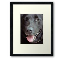 The Happy Lab Framed Print