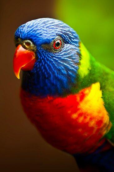 Rainbow Lorikeet V by Damienne Bingham