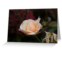 Rose 4 Greeting Card