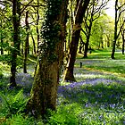Bluebell Heaven by Charmiene Maxwell-batten