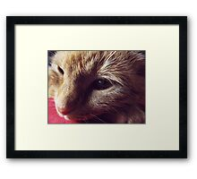 Dharma the cat Framed Print