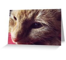 Dharma the cat Greeting Card