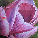 Opera Tulip by ddonovan