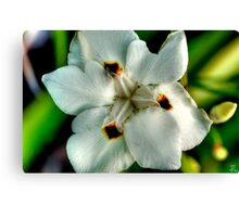 HDR Flowers Canvas Print