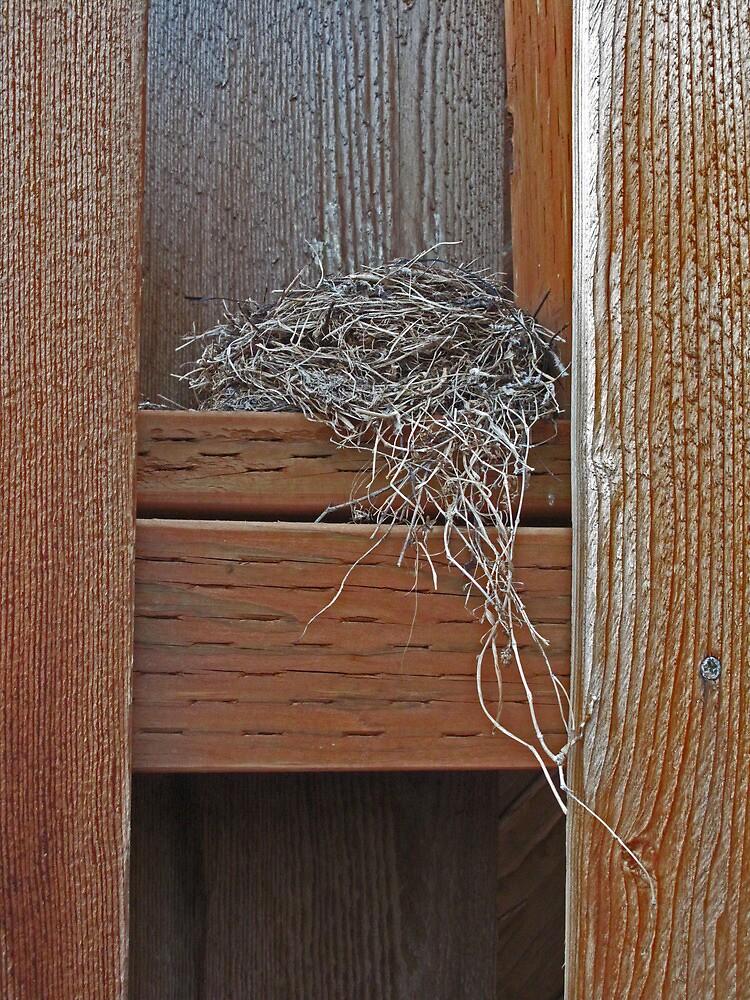 Birdsnest. Outside the backdoor. by LCleaveland
