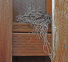 Birdsnest. Outside the backdoor. by LCleaveland