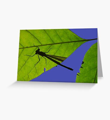 Damselfly Shadow Greeting Card