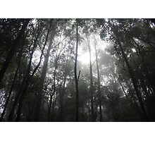 Mist in the moutains Photographic Print