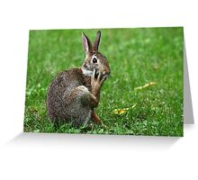 Worried Wabbit Or Bemused Bunny ? Greeting Card