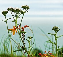 Wild Flowers Along The Coastal Path  by Susie Peek