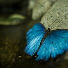 Butterfly by David Preston