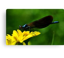 Banded Demoiselle Canvas Print