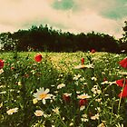 Poppies in Pilling  by Nicola  Pearson