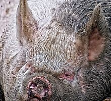 Happy as a Pig in ..................., by Vein