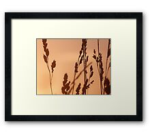 Evening Gold Framed Print