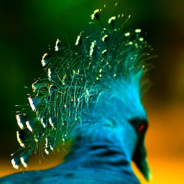 Victoria Crowned Pigeon by Damienne Bingham