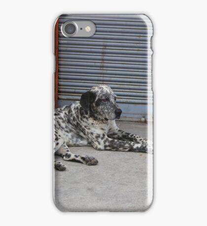 Black and White Dog on a Sidewalk iPhone Case/Skin