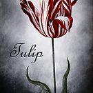 Vintage Tulip by Christine Annas