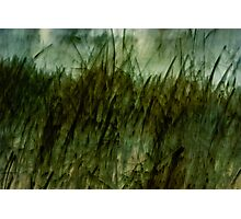 Every Blade of Grass Photographic Print