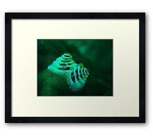 xmas tree worm coral bay western australia Framed Print