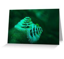 xmas tree worm coral bay western australia Greeting Card