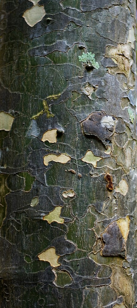 Textures - Tree bark, Mt Mee by Jordan Miscamble