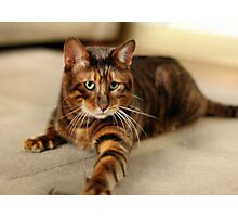 Young Toyger Photographic Print