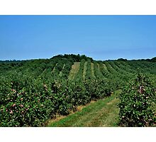 Marker-Miller Orchards Photographic Print