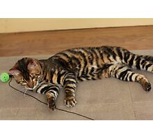 Cool Toyger Photographic Print