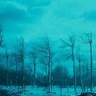 Forest, Goat Island, Niagara Falls by Dean Bailey